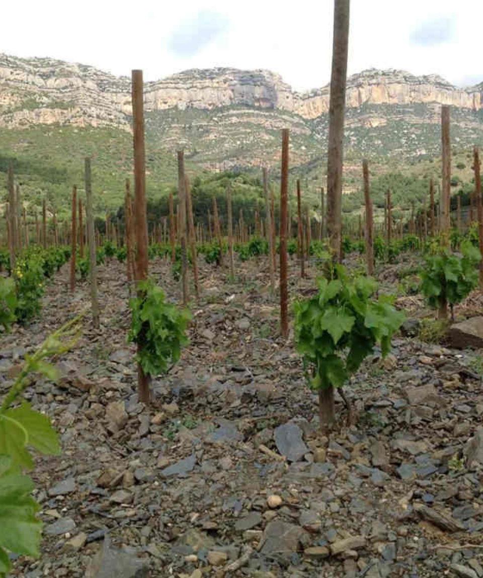 ImgProd_Kosher_Wine_Gastronomy_03-1024x745a