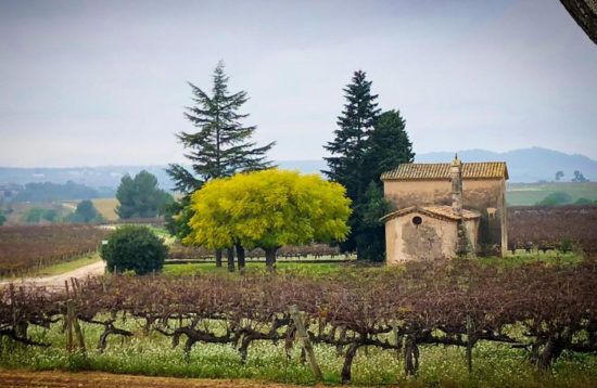 Best Penedes vineyards views