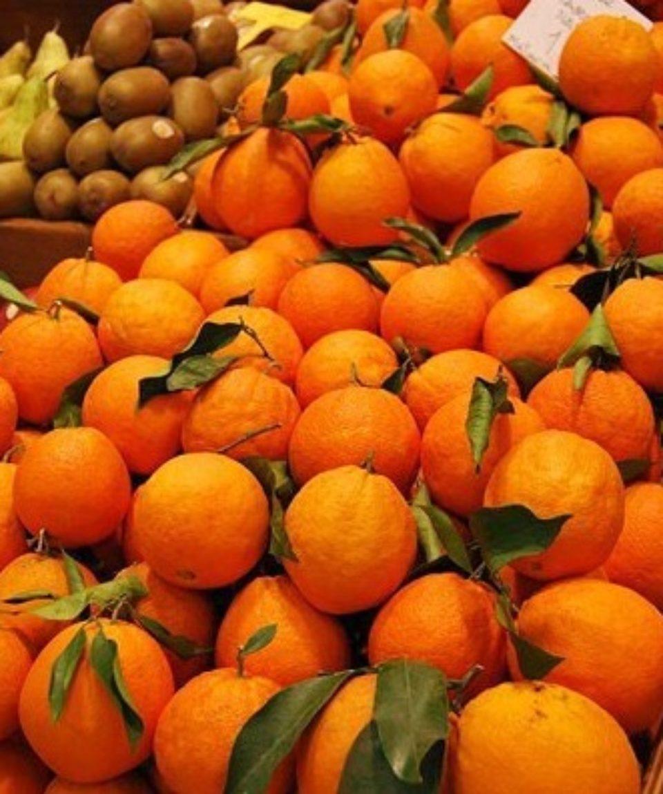 Oranges in Mallorca
